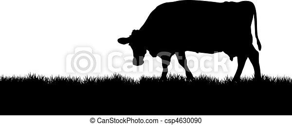 cow - csp4630090