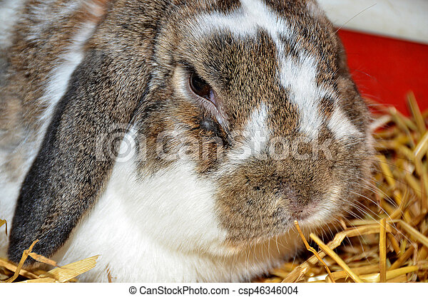 close up of floppy eared bunny in straw