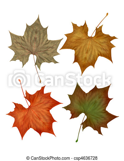 Autumn fall leaves isolated - csp4636728