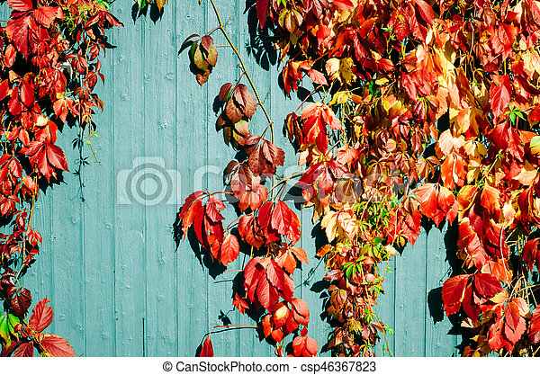 red autumn leaves with wooden background - csp46367823