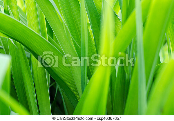 blurred background with fresh green grass - csp46367857
