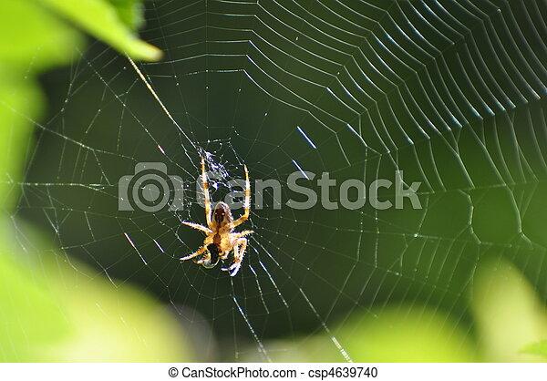 Spinning spider - csp4639740