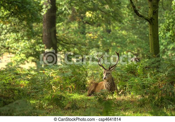 Red Deer Rutting Season Autumn Fall - csp4641814