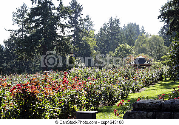 Portland Rose Garden  - csp4643108
