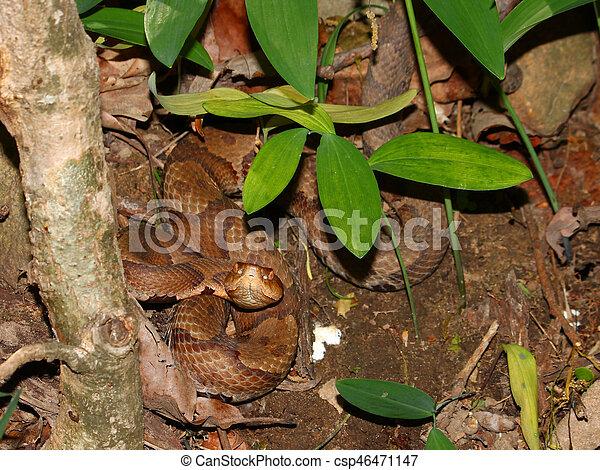 Copperhead Snake Alabama Wildlife - csp46471147