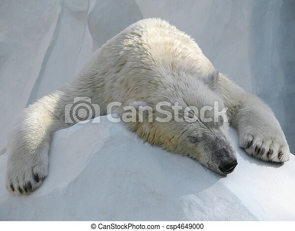 Sleeping polar bear - csp4649000