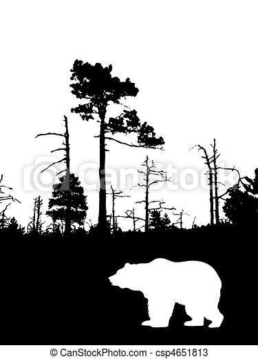 silhouette bear on background wild wood    - csp4651813