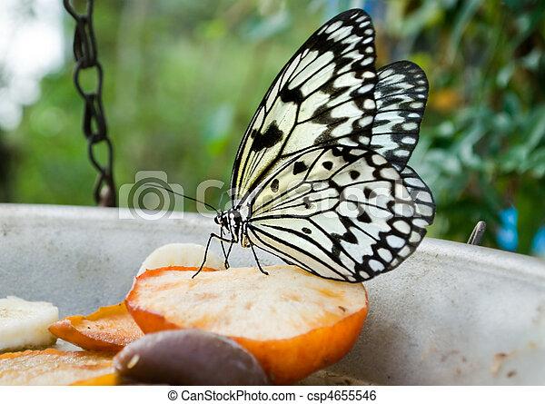 Image de papillon captivity alimentation pomme nymphe arbre csp4655546 recherchez - Pomme papillon ...