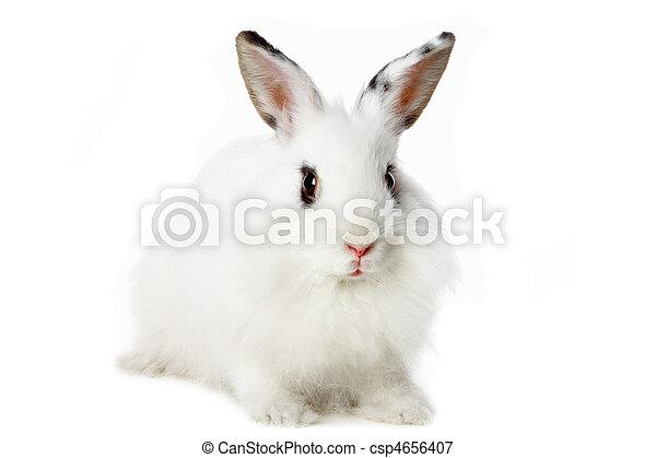 Fluffy mammal - csp4656407