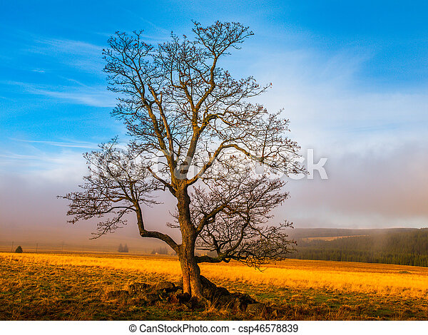 Colorful autumnal landscape after rain with beautiful tree, mist and blue sky. Dramatic scene.