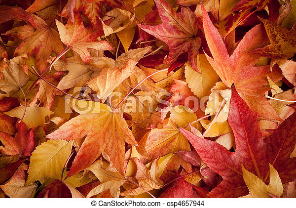 leafs in autumn - csp4657944