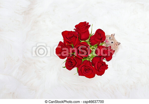 Stop and Smell Roses Concept - csp46637700