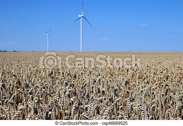 wind turbines on wheat field renewable energy summer season - csp46669525