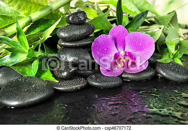 Spa concept with black basalt massage stones, pink orchid flower and lush green foliage covered with water drops on a black background