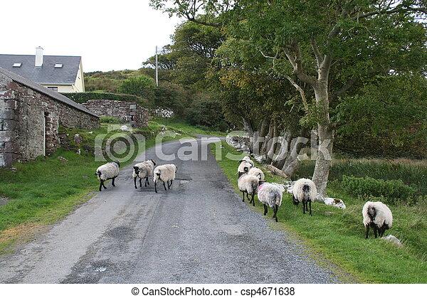 Rural lane - csp4671638