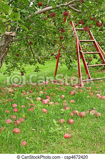 Apple season - csp4672420