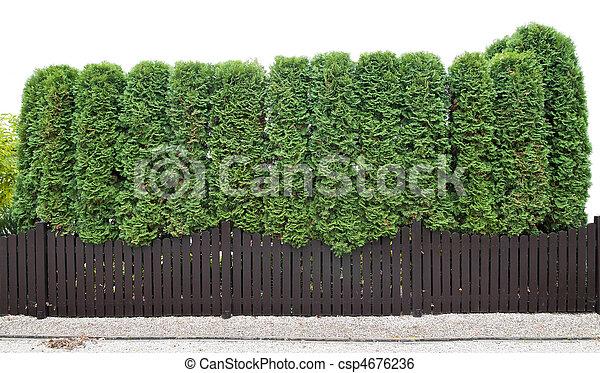 Archivi immagini di sempreverde piante recinto for Piante siepe sempreverde