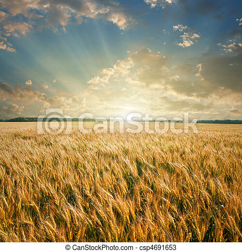 wheat field on sunset - csp4691653