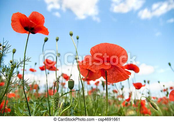 poppy against blue sky - csp4691661