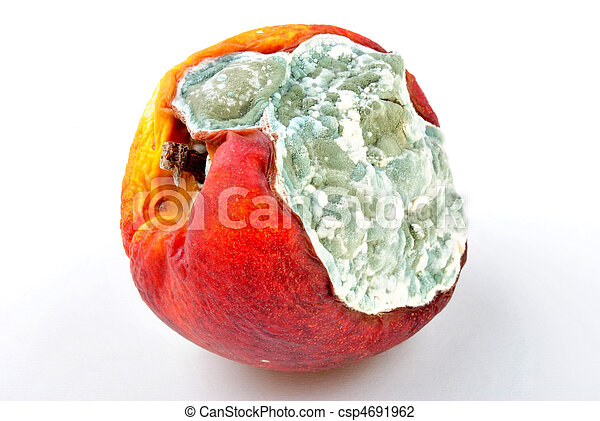mouldy organic vegetable unhealthy to eat on a timber board - csp4691962