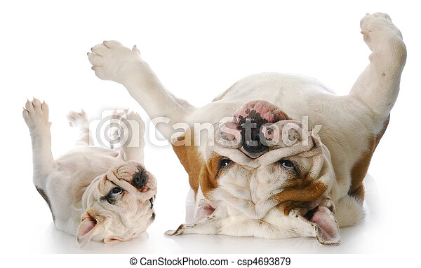 itchy dogs - csp4693879