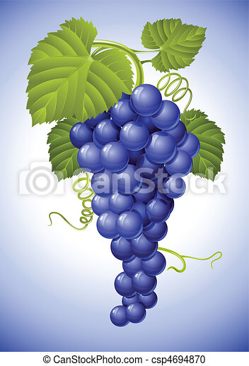 cluster of blue grape with green leaves - csp4694870