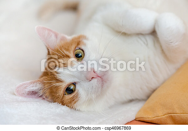 Tired ginger cat rest on bed with wide open eyes, looking interested