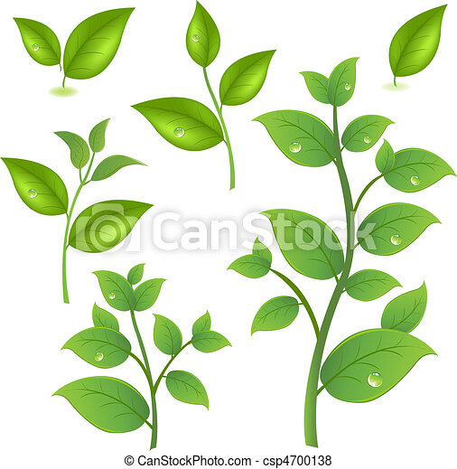 Collection Of Green Branches - csp4700138
