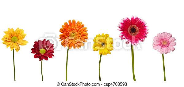 flower nature garden botany daisy bloom - csp4703593