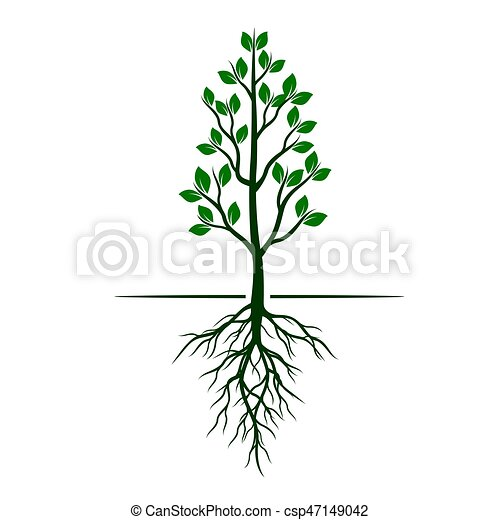 White Trees with roots on green background. Vector Illustration. - csp47149042