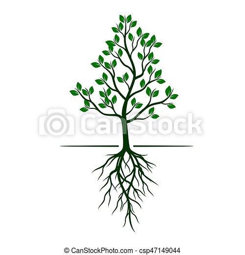 White Trees with roots on green background. Vector Illustration. - csp47149044