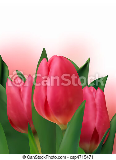 Bouquet of the fresh tulips. - csp4715471
