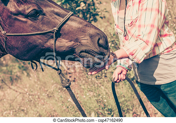 Petting animals, animal and human love concept. Closeup of brown horse eating from woman hand