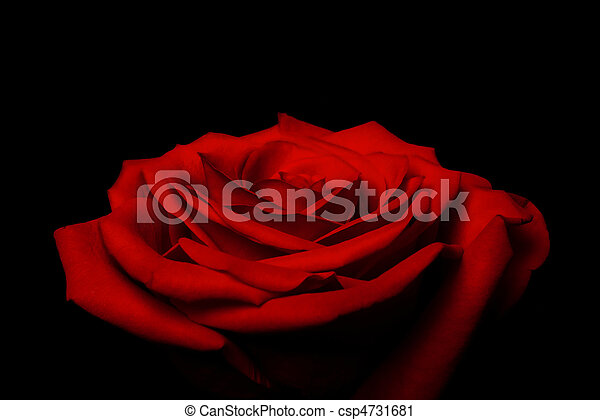 Layers of love petals - red rose - csp4731681