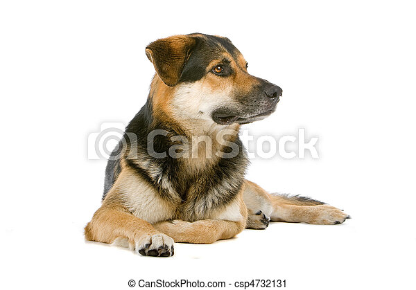 mixed breed dog - csp4732131