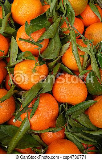 Clementines - csp4736771