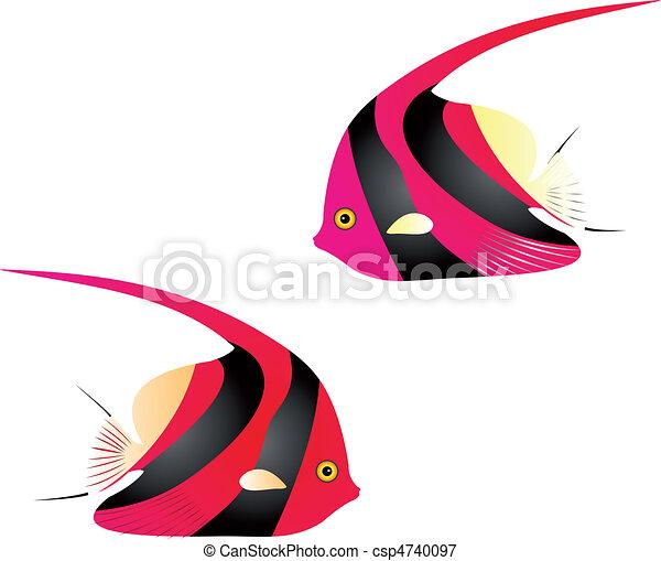 Angelfish vector - csp4740097