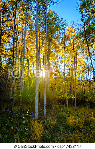 Trees in the Fall in Dixie State National Forest, Cedar City, UT.