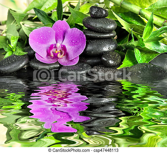 Spa concept with black basalt massage stones, pink orchid flower and lush green foliage covered with water drops on a black background reflected in a water surface with small waves