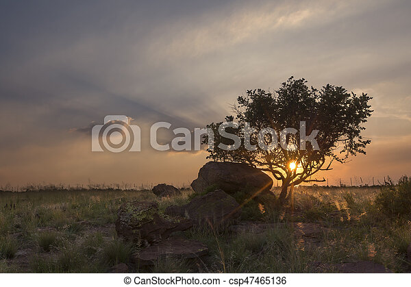 Landscape of a tree on a hill with rocks and clouds at sunset - csp47465136