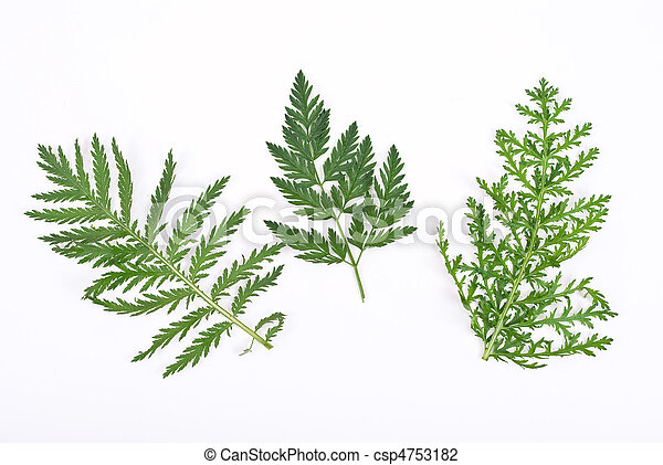 Herbarium - csp4753182