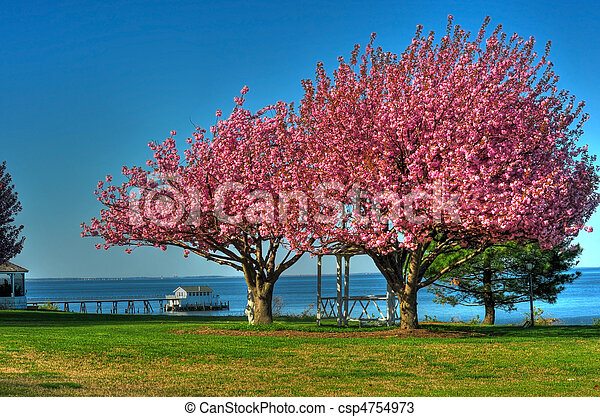 Spring in Maryland - csp4754973
