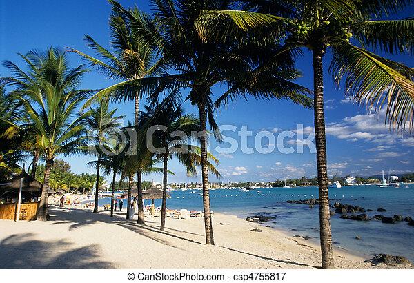 Palm trees on Grand Baie beach at Mauritius Island - csp4755817