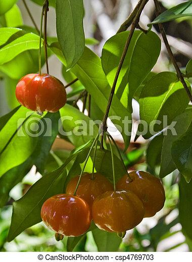 Brazilian Cherry (Pitanga) on Tree - csp4769703