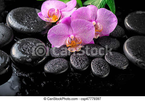 beautiful spa setting of blooming twig lilac orchid flower, green leaves with water drops and zen basalt stones on black background