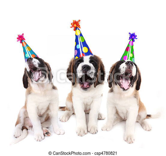 Singing Saint Bernard puppies with birthday party hats - csp4780821