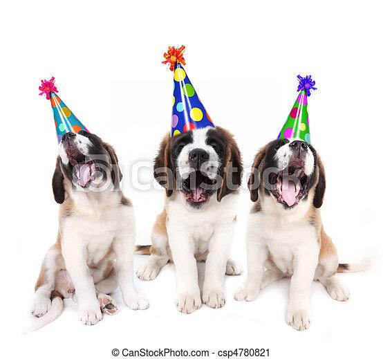 帽子,  bernard, 生日, 聖徒, 小狗, 黨, 唱 - csp4780821