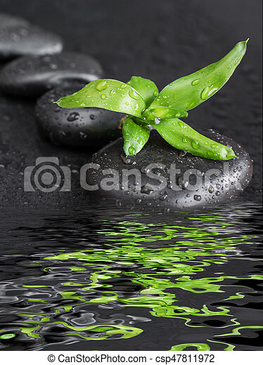 Spa concept with black basalt massage stones arranged chain and green bamboo sprout covered with water drops reflected in the water surface with small waves on a black background