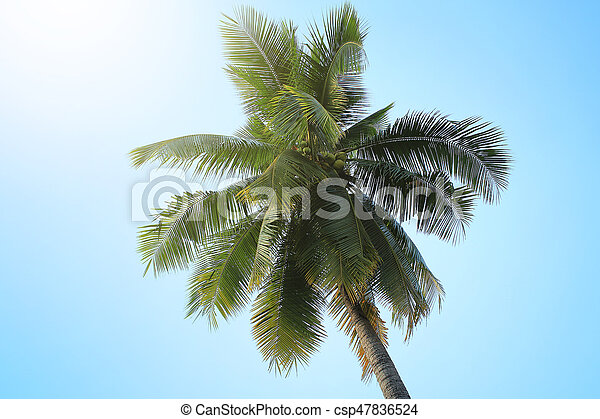 Coconut tree with blue sky - csp47836524