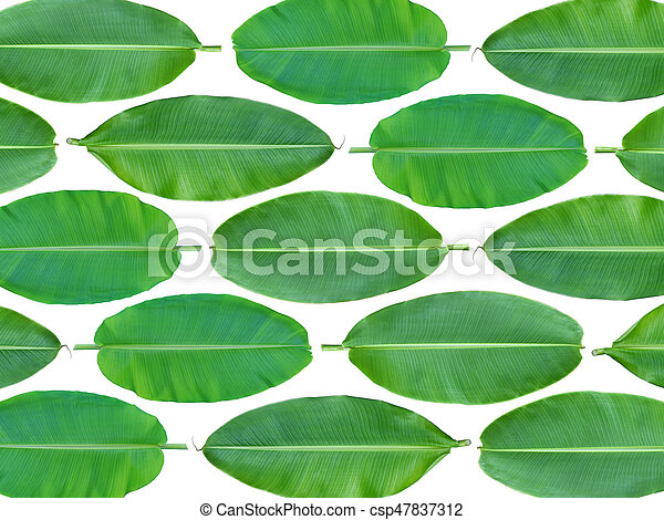 Fresh whole banana leaf background - csp47837312